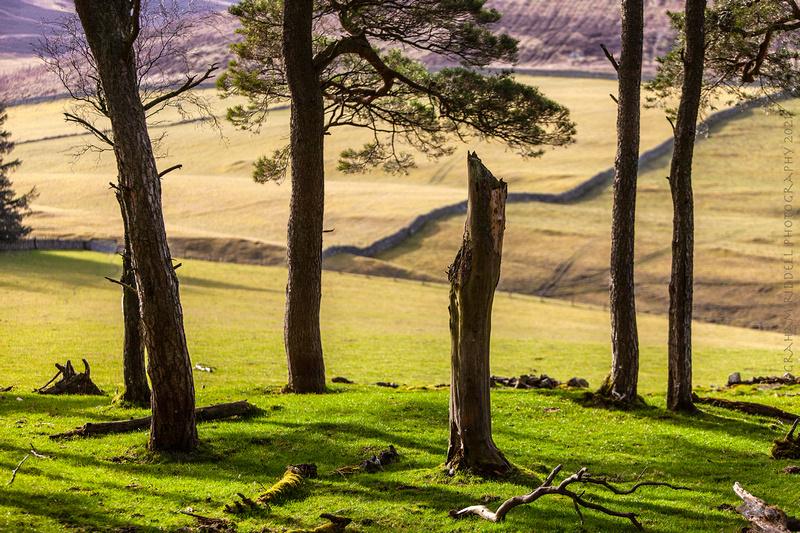 Nature's Monolith_2737_landscape copy