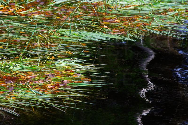 Venachar Reed-2017-9199