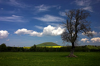 Minto Hill and Tree