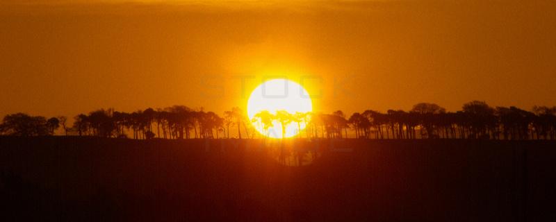 Sunrise over Trees-banner