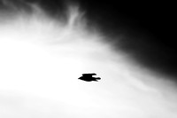 Flyby_1023