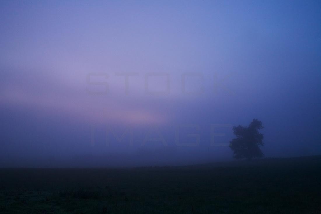 An Eerie Luminance_7465