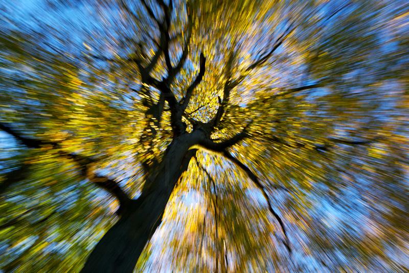 I Fell for Autumn_0508