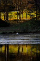 Reflections of Bowhill-9961