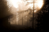 Mist in the Forest_2471-z