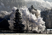 Chilly Trees_2499_z